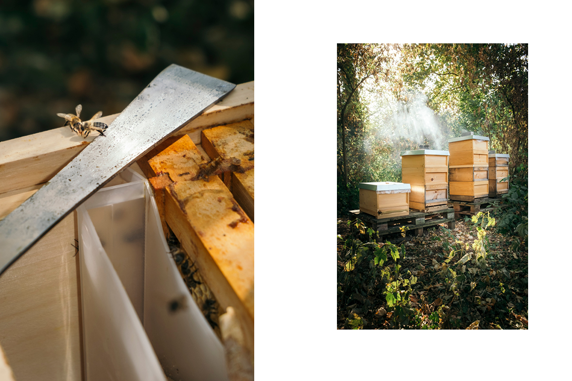 raw honey - jann höfer photographer