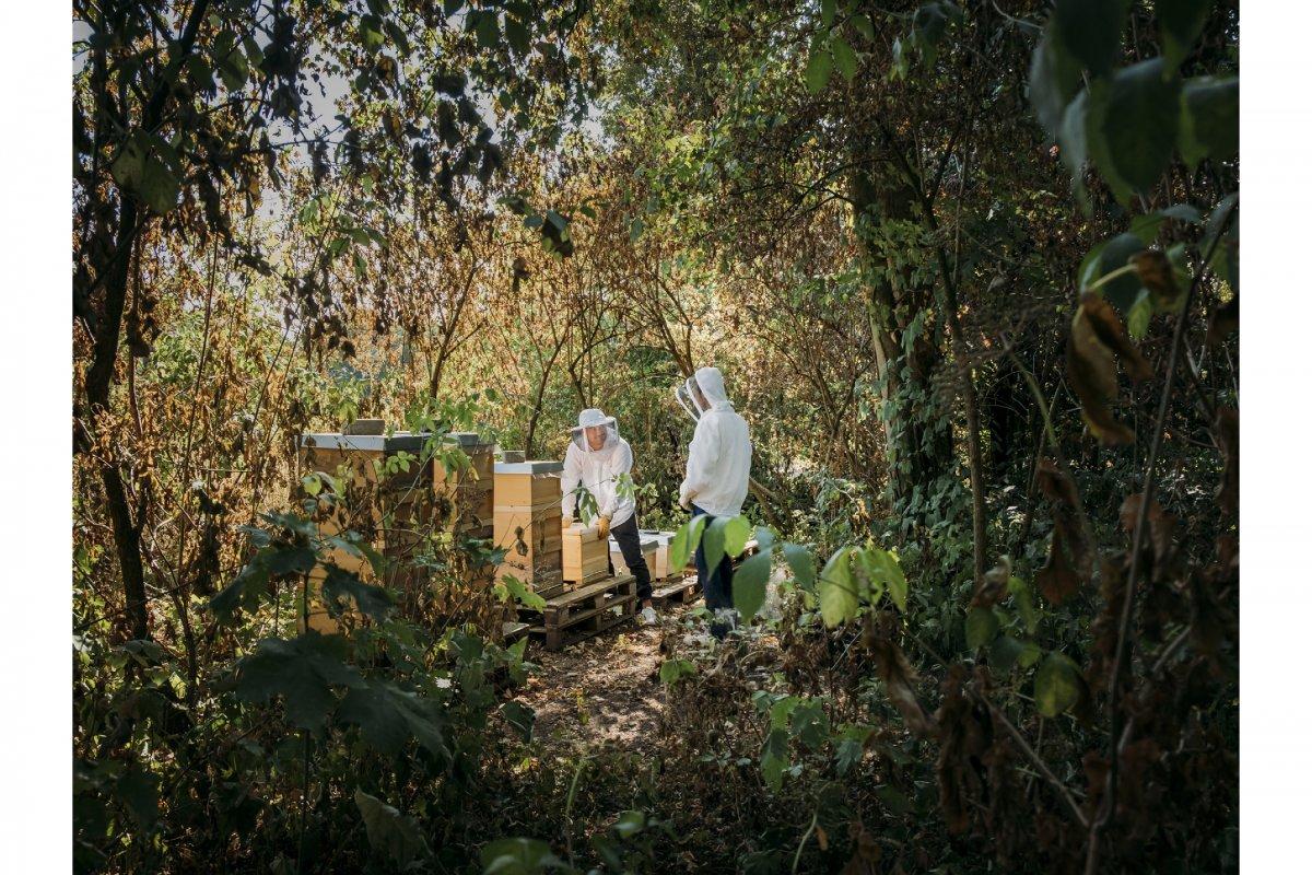 beekeeping - jann höfer photographer